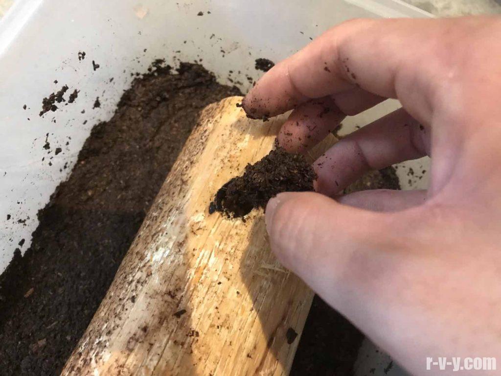 朽ち木の穴にも土を詰めていく