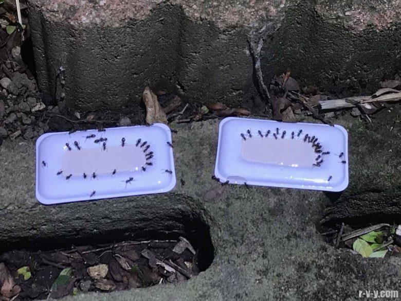 外に配置したアリメツに群がる多数のアリ