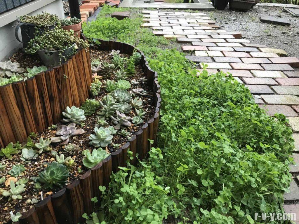 1年前作りたての多肉花壇