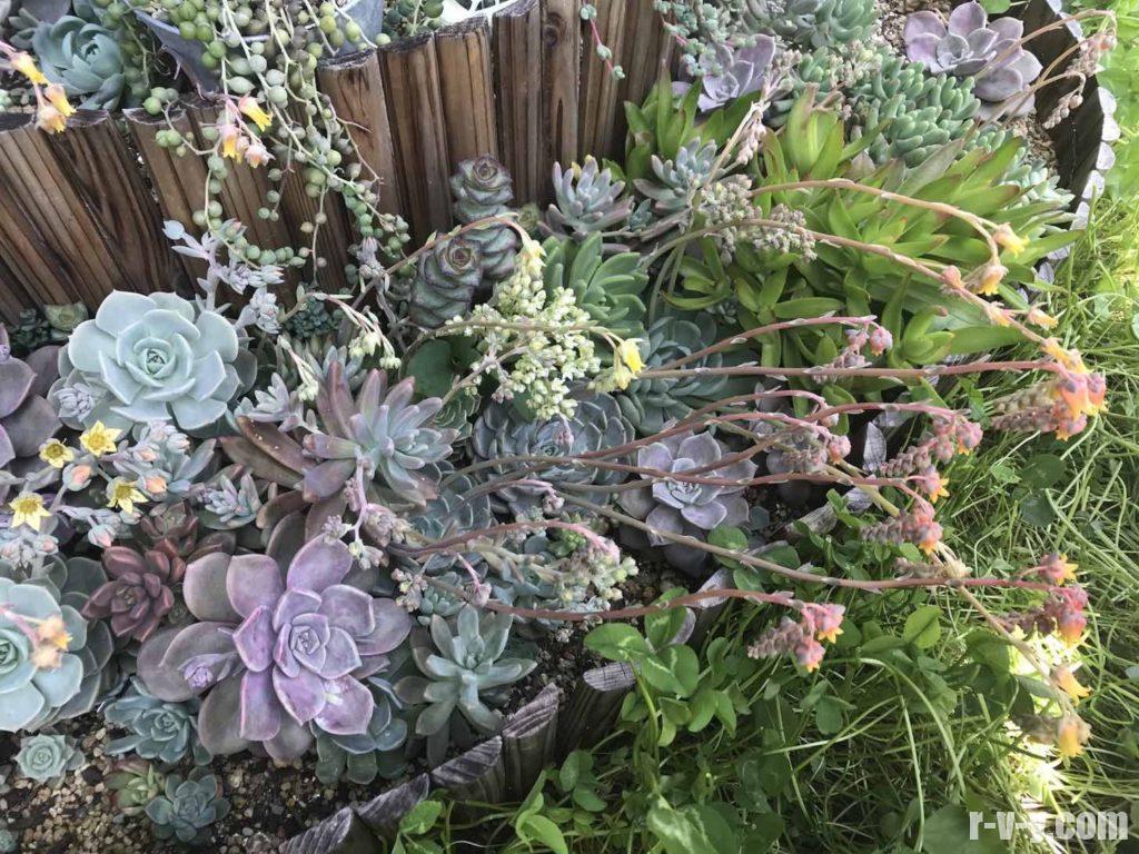 花芽がお化けのように伸びる花壇