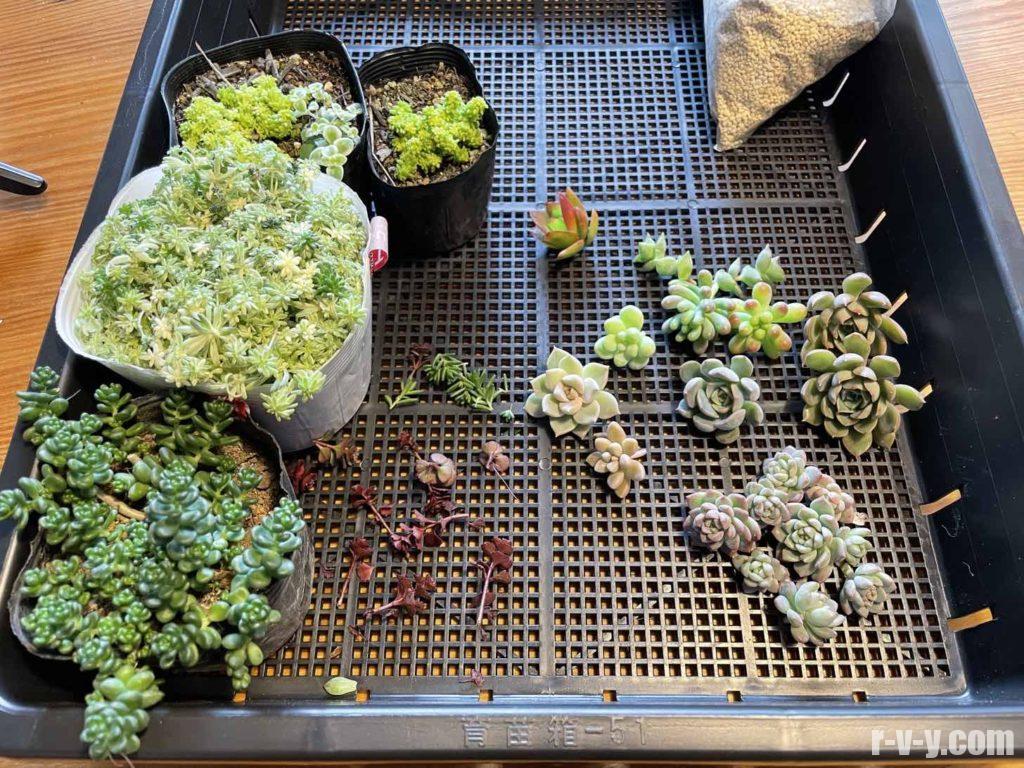 寄せ植えに使う多肉植物