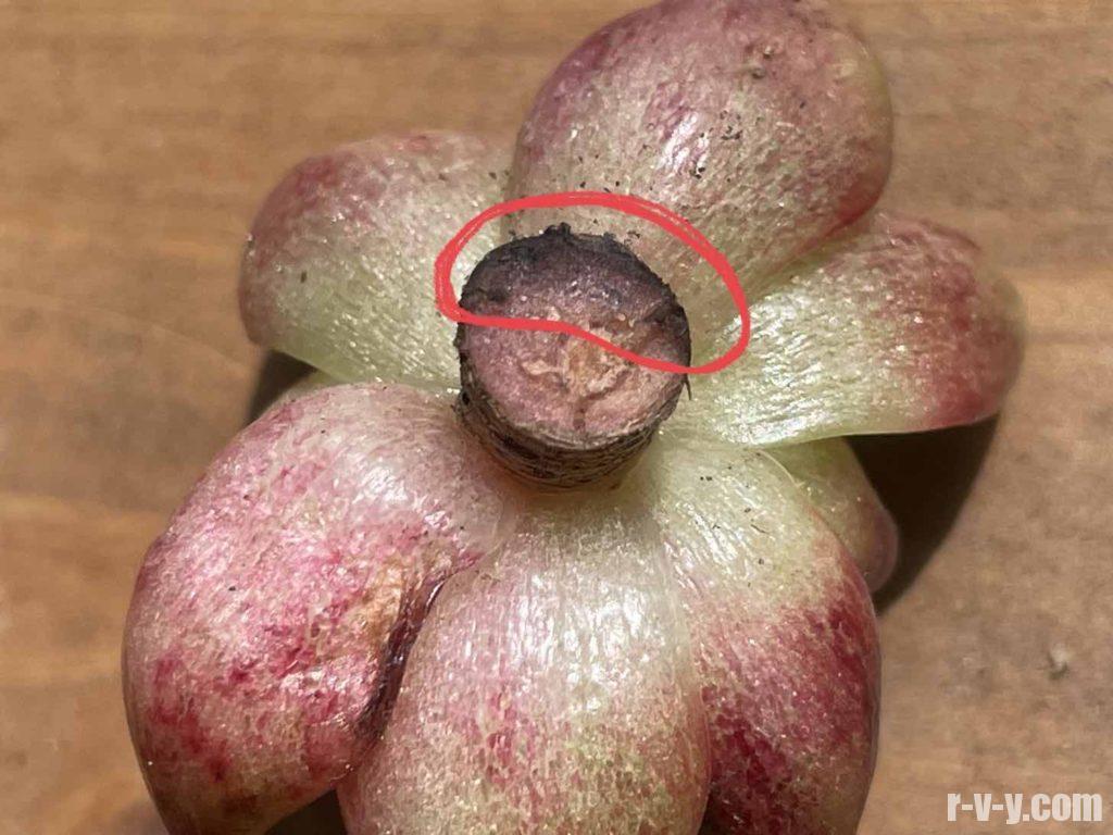 黒く変色した茎
